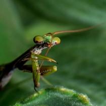 """Exposição fotográfica """"Tesouros da Mata Atlântica"""" traz reflexão sobre a biodiversidade em Ubatuba"""
